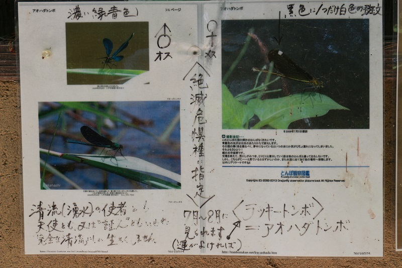 002-IMG_0117.jpg