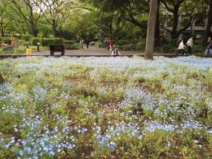 IMG_3065 お花畑