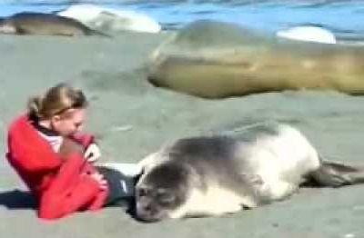 Como interagir com um leao marinho