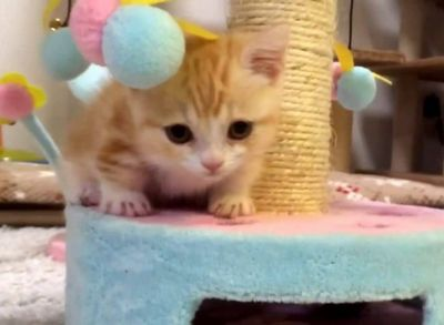 The Sweetest Little Kitten Too Cute!