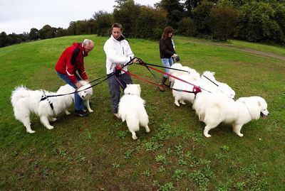 Samoyed Birthday Party