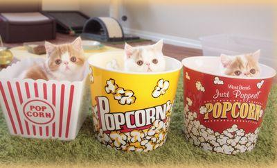 Caramel Popcorn Kittens