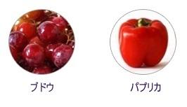 its skin_イッツスキン_マイボトル_ビタ_スージングジェル (4)