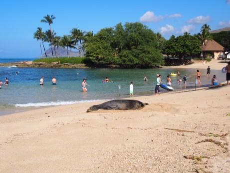 ハワイ_P1270037