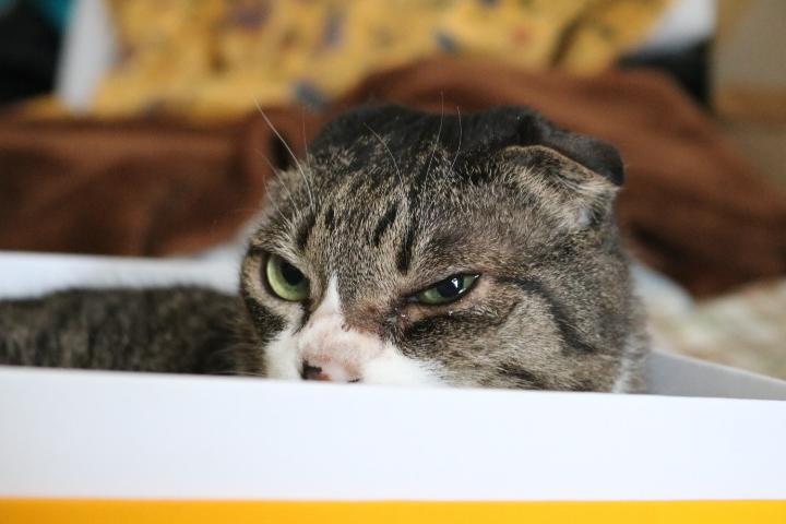 猫ドリル1