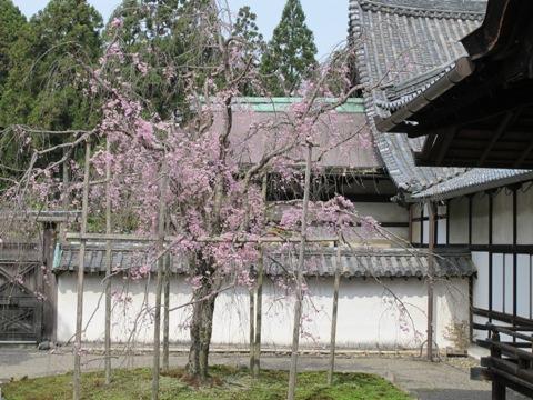 醍醐寺 017