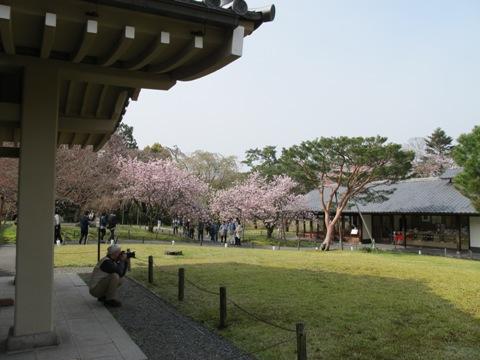 醍醐寺 022