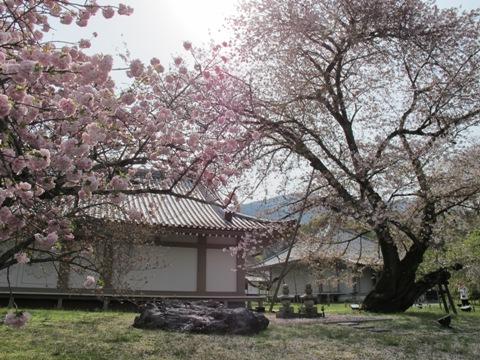 醍醐寺 025