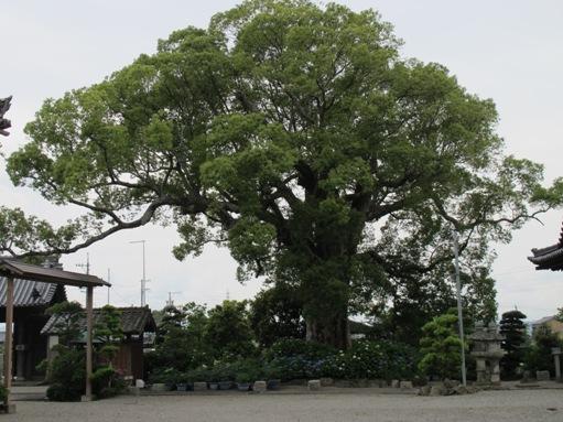 松阪城下 020