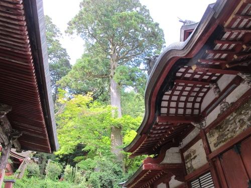 東奈良より 218