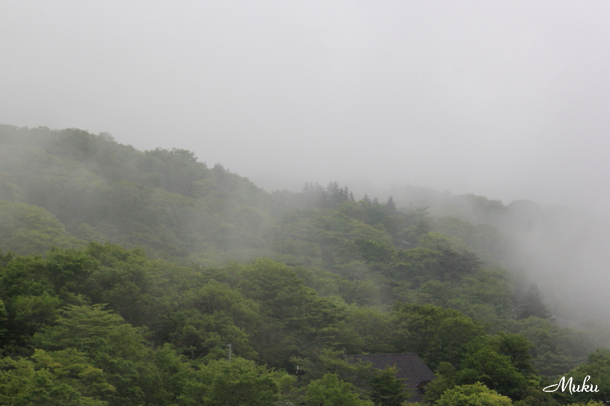 160425_朝霧