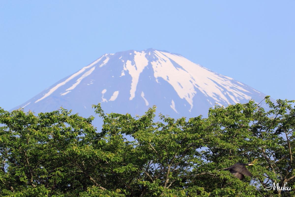 160529_雪解富士