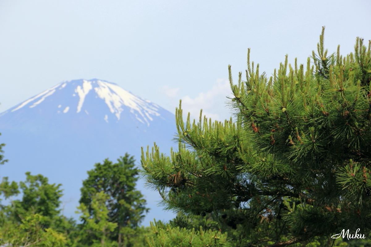 160604_朝の富士