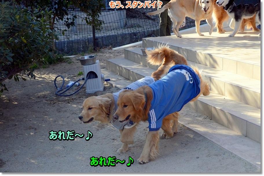 DSC_3490areda~aregakita