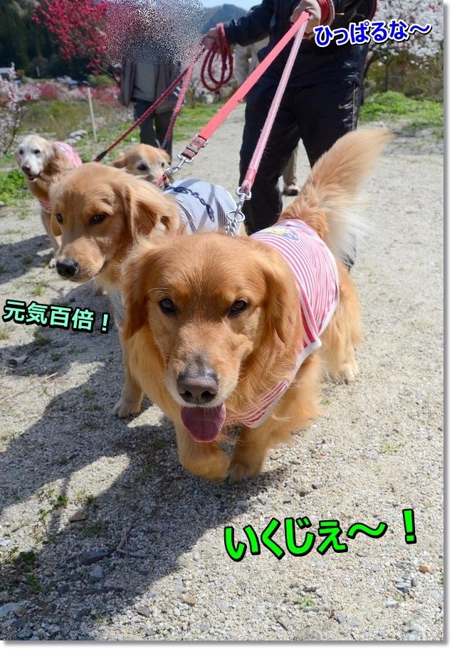 DSC_6072susume~