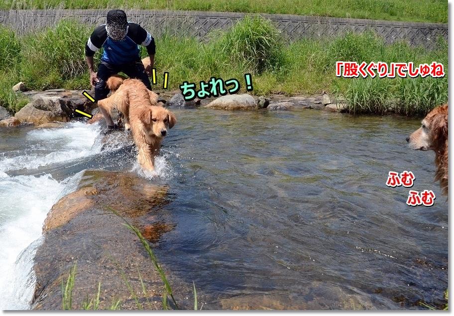 DSC_9119matakuguri~tonda