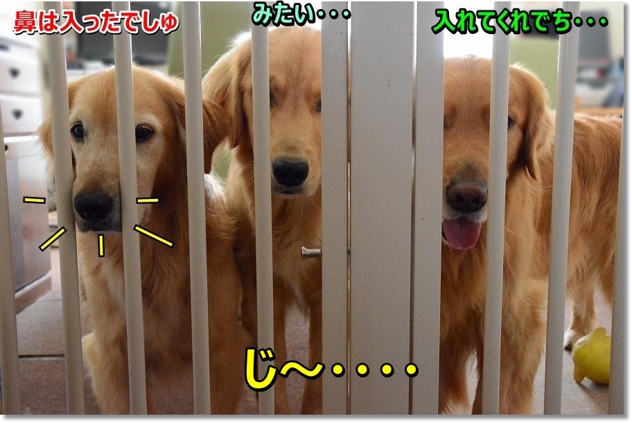 DSC_5658ji~