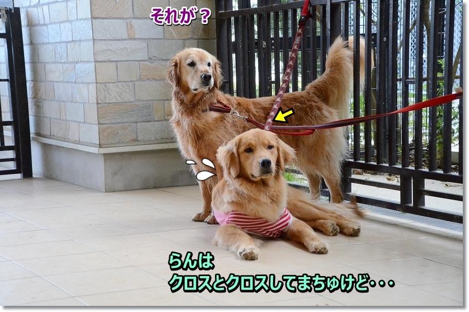 DSC_0308ranha kurosutokurosu