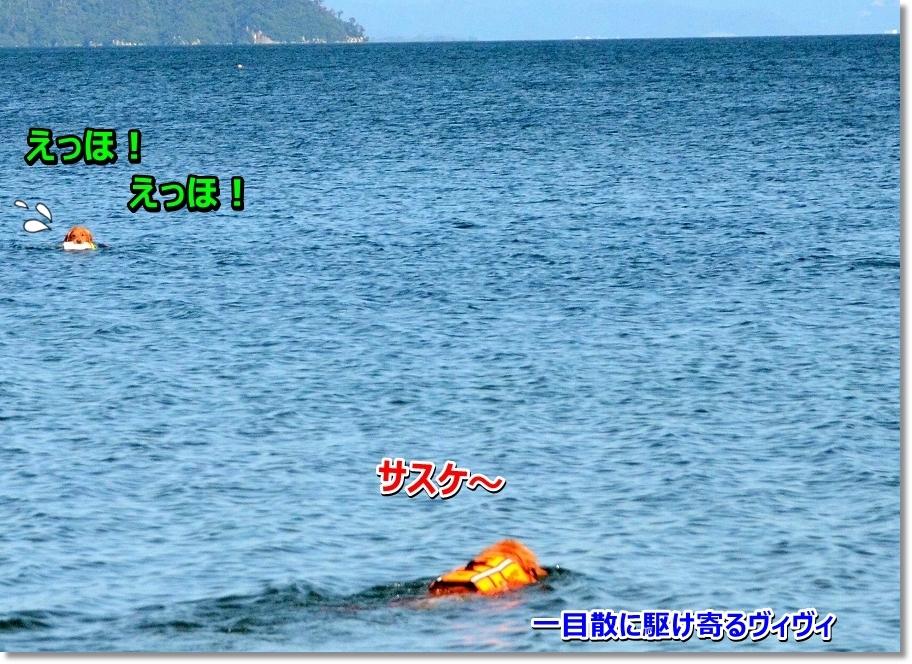 DSC_2098 itimokusannikakeyoru