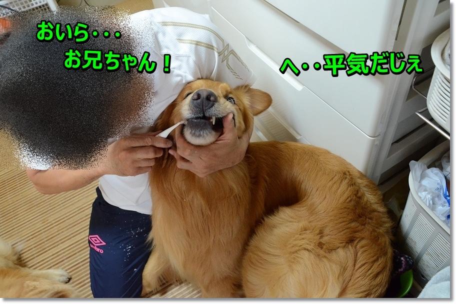 DSC_1671 oiraoni~chan