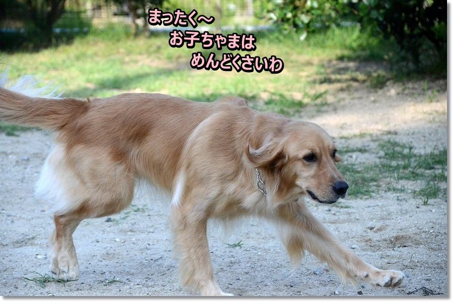 DSC_1568mattaku,,,