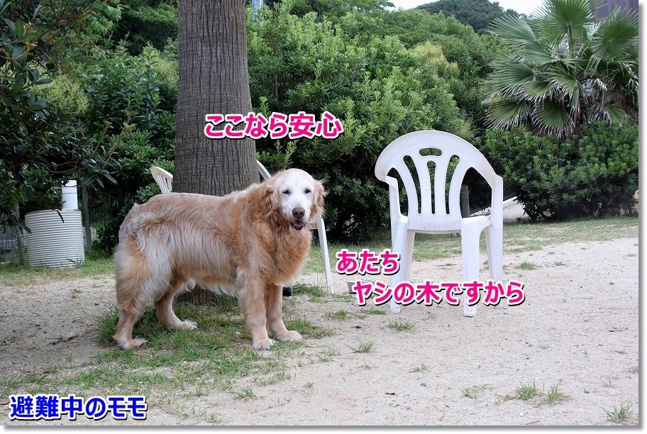 DSC_0209 hinan