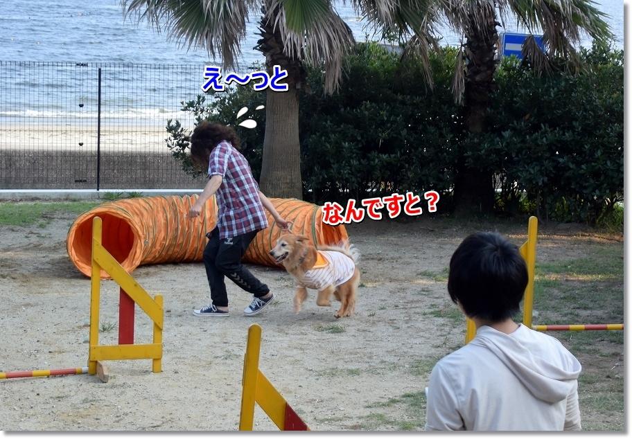 DSC_0536え~と