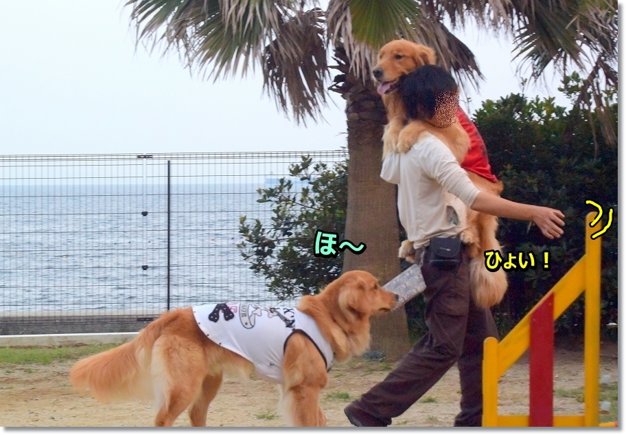 DSC_0931sense~katate