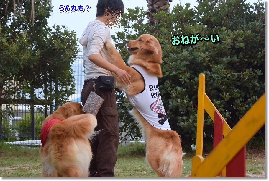 DSC_0952 onegaisimasyu