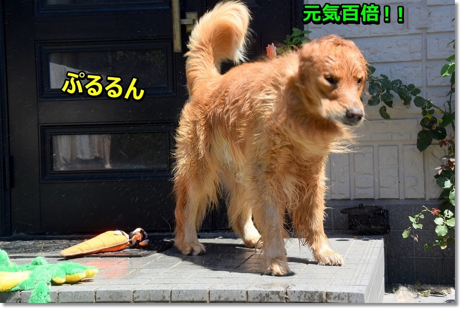 DSC_1486 genkihyakubai