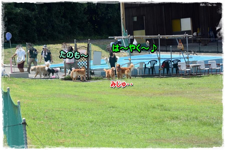 DSC_1539 hayaku~--1