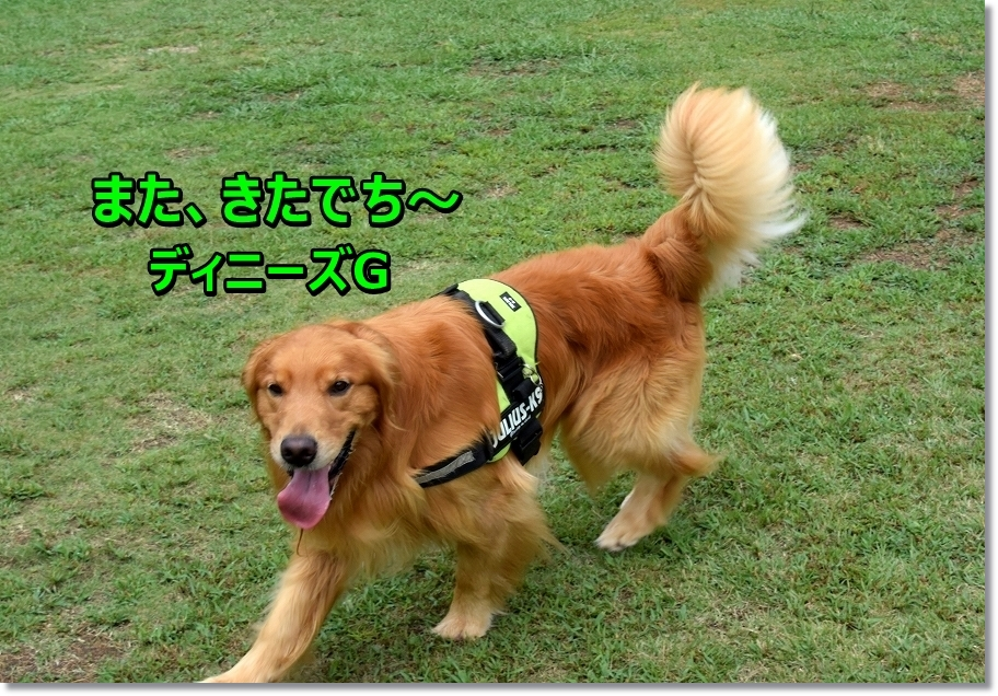 DSC_2266 matakitayo