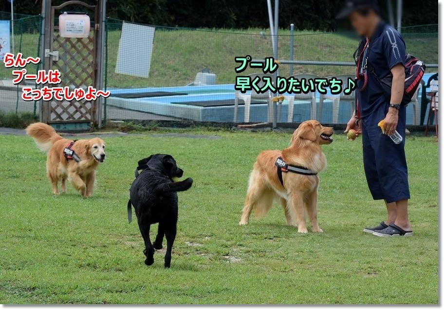 DSC_2267 hayaku pu-ru