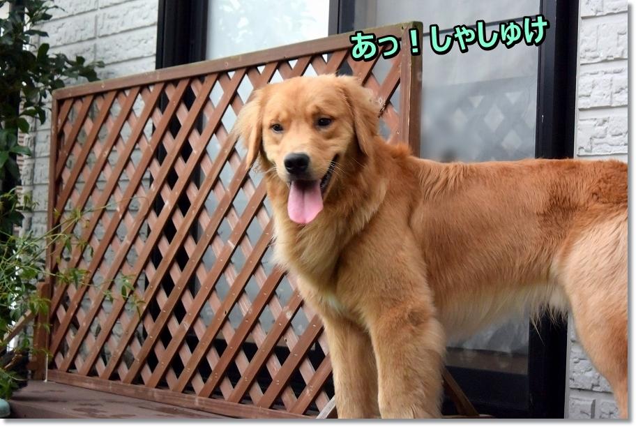 DSC_1123 a!syasyuke