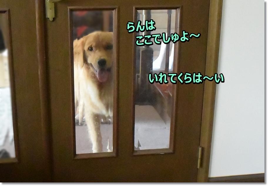 DSC_2000 ranhakoko