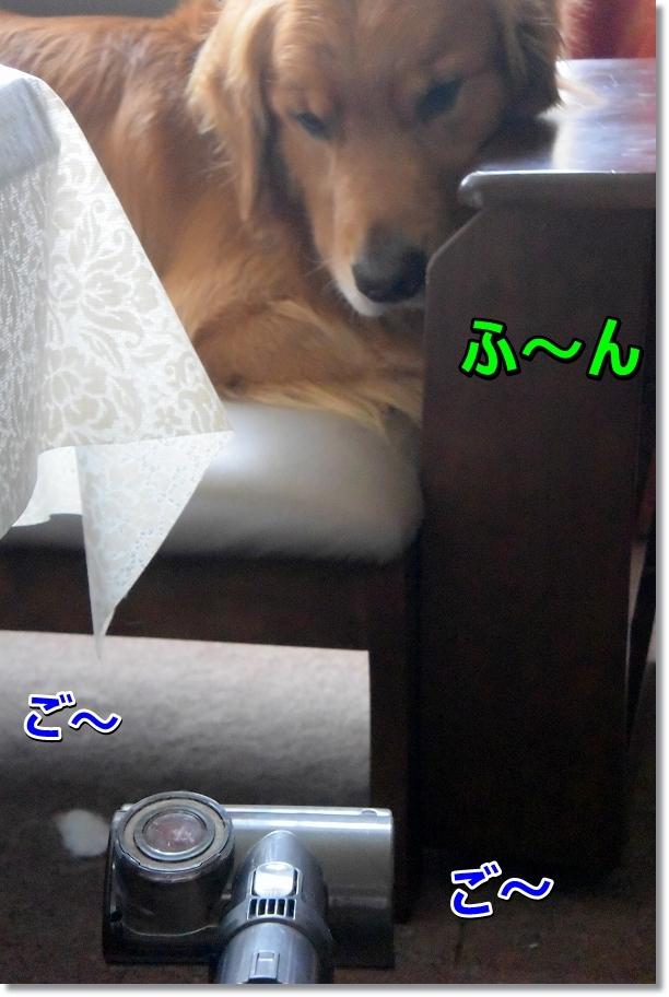DSC_2002 hu~n