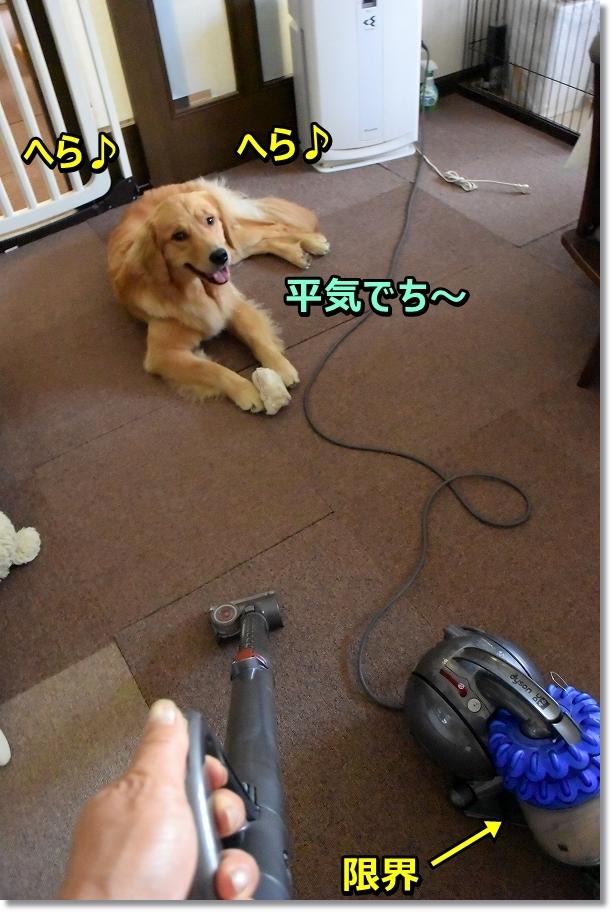 DSC_2012 kowakunaino