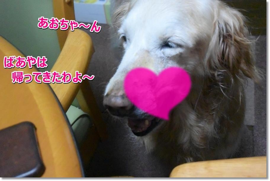 DSC_3441 aochan