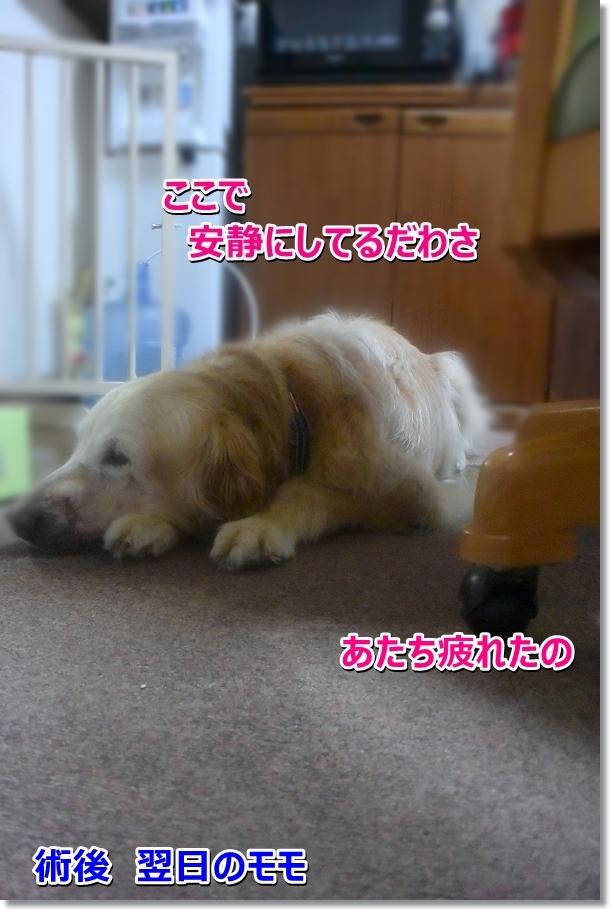 DSC_3472 sizukadawa