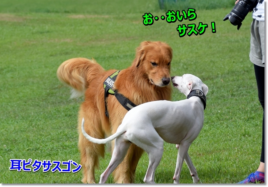 DSC_2652 oirasasuke