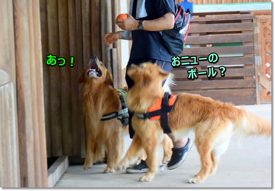 DSC_2660 onyu-da
