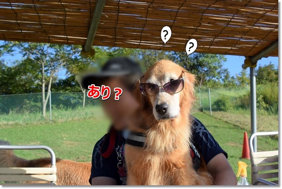 DSC_2779 kurai