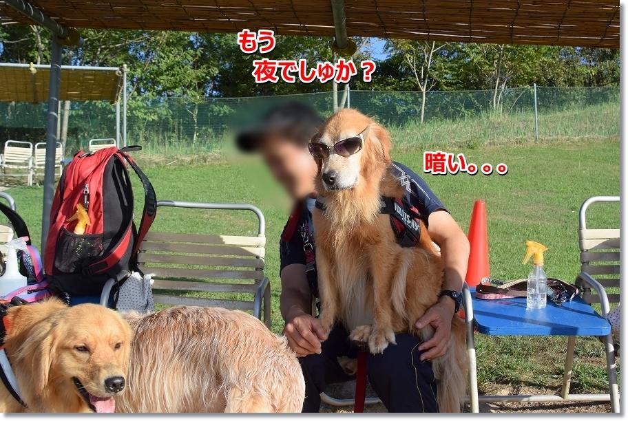 DSC_2780 yorudesuka