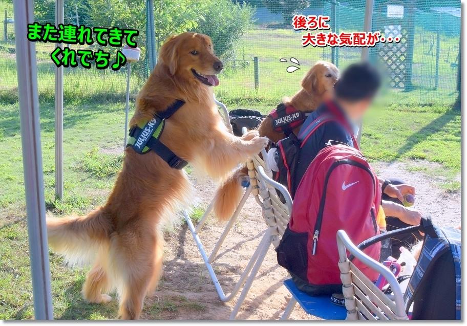 DSC_2797 oiramo! kigurumikana