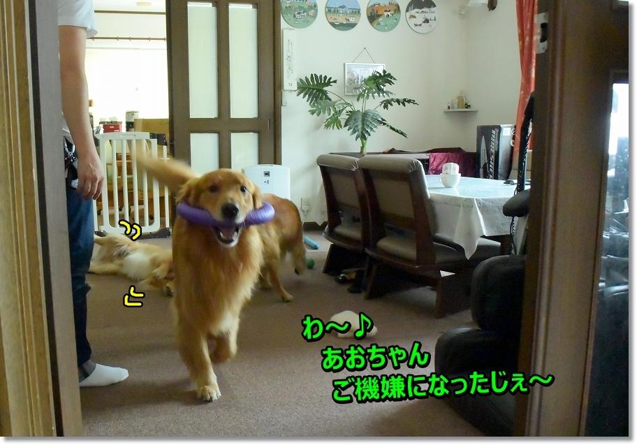 DSC_3619 あおちゃんがピース