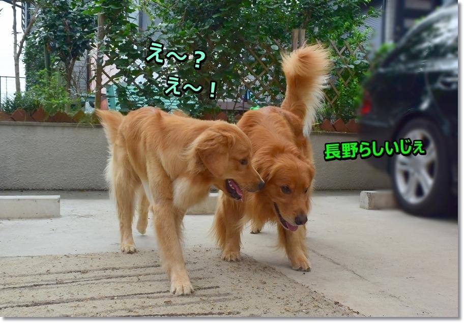 DSC_3663 長野でち