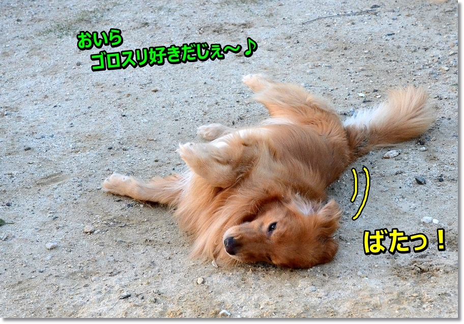 DSC_3254 sasue