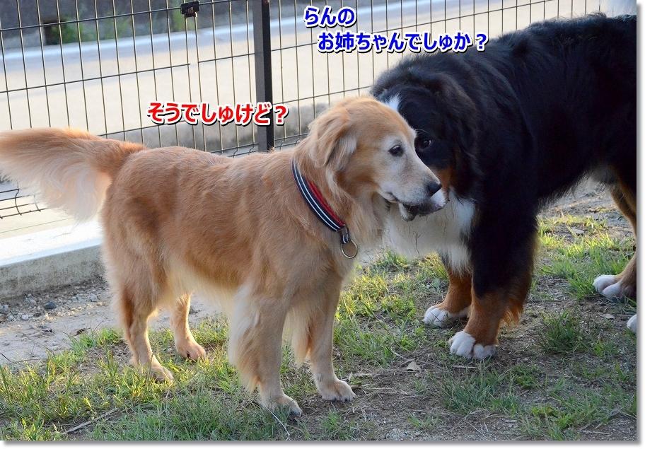 DSC_3291ヴぃちゃん