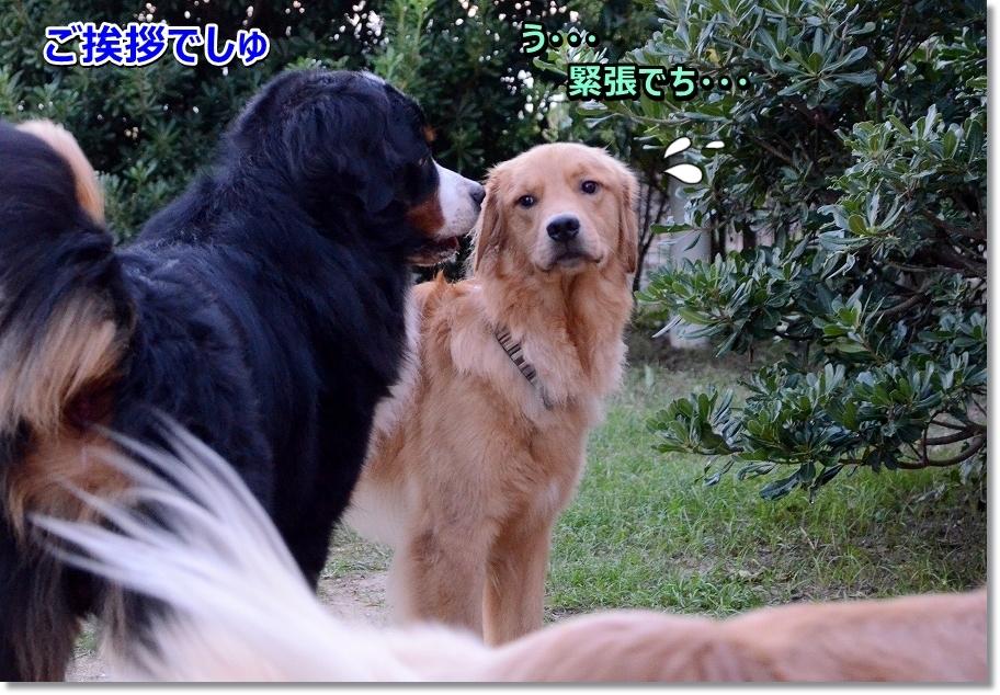 DSC_3380 くんくん