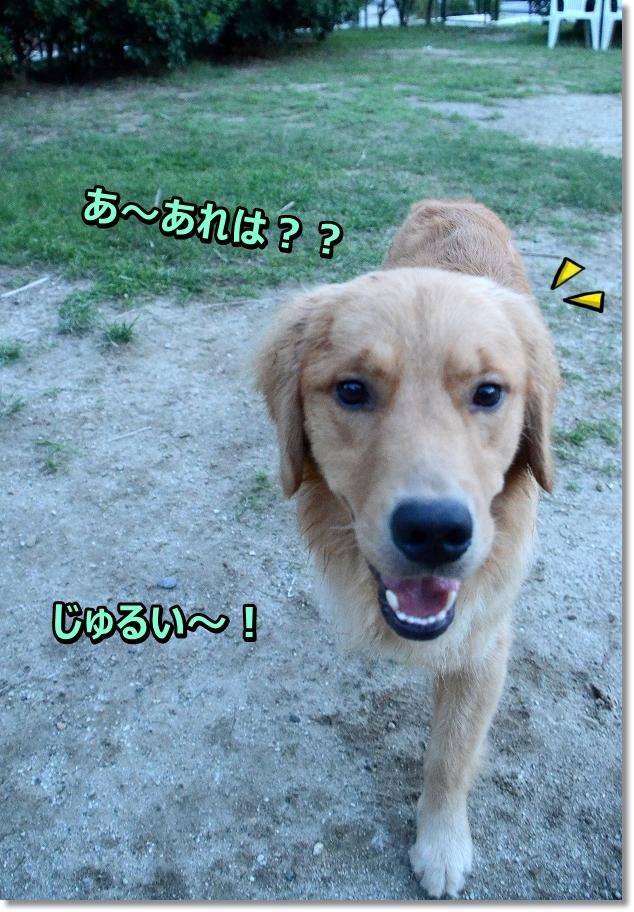 DSC_3391 あ~じゅるい